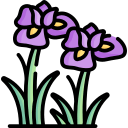 iris-1-1
